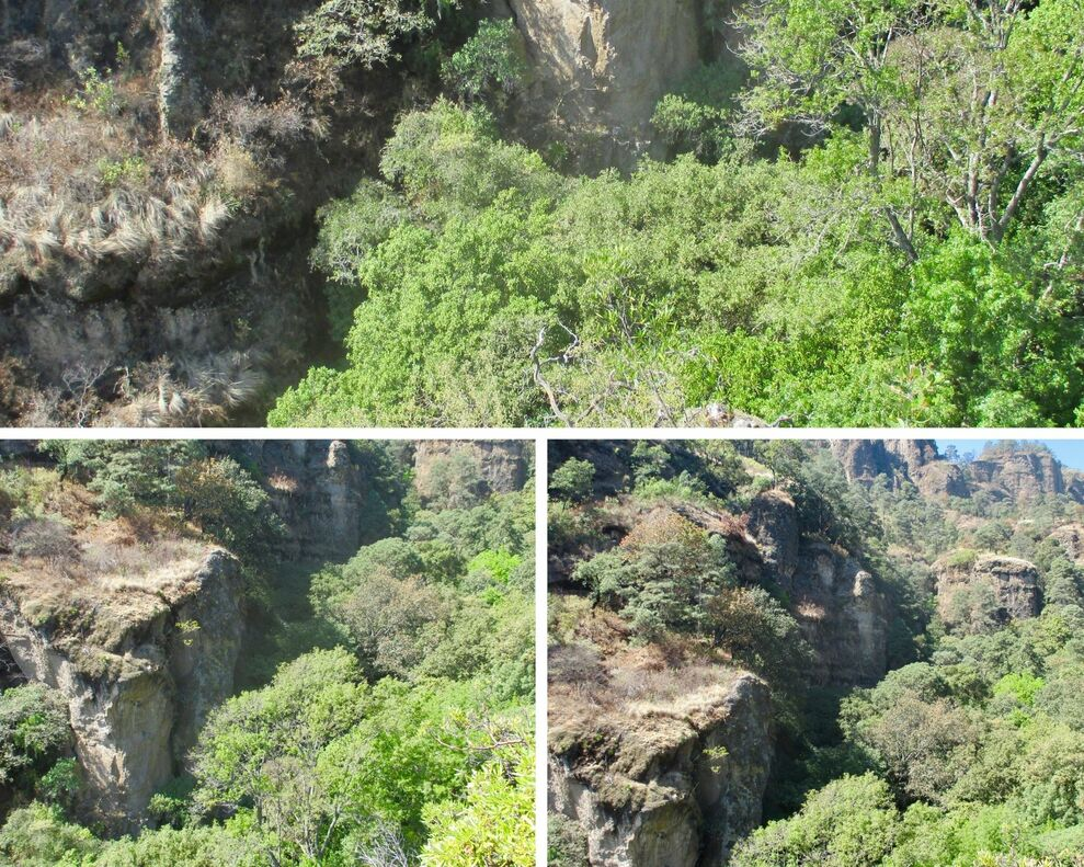 These three photos have dizzying views of canyons from different perspectives taken on a hill above them. Included is a lot of green vegetation, as the cliff sides provide shade and collect water.