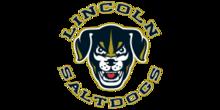 300x150 Logos for Website Saltdogs
