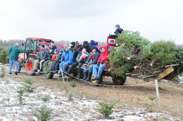 A tractor carrying people and trees, Thomas Tree Farm