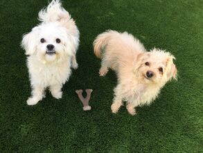 Happy Puppy L.A. recommends Benebone dog bones when it comes to dog toys. You can purchase Benebone from the Happy Puppy L.A. Amazon store!