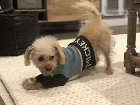 Happy Puppy L.A. recommends Max-Bone dog products and attire