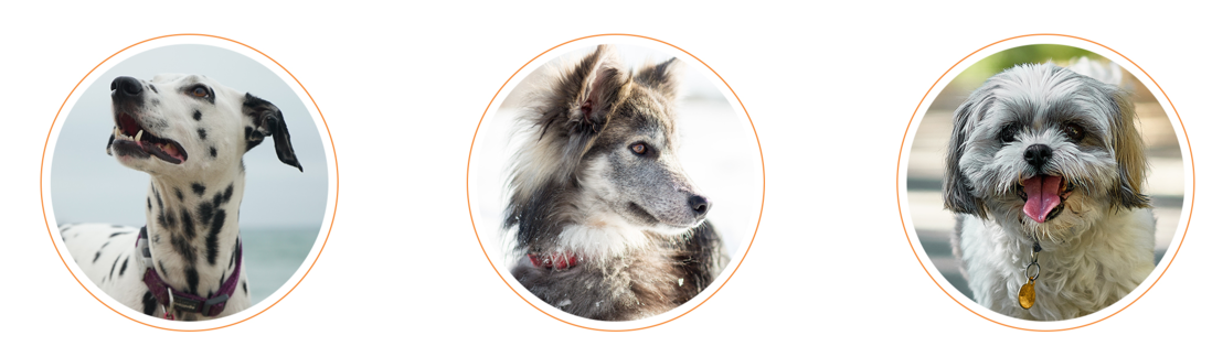 DOGTV - Entertain, Love, and Comfort Your Dog All Day