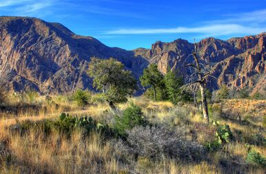 Big Bend National Park guided hiking tour