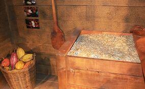 Cocoa breeder invents fermentation process to create fine cocoa wrbm large 1