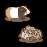 Meerschweinchen Zeichenfläche 1