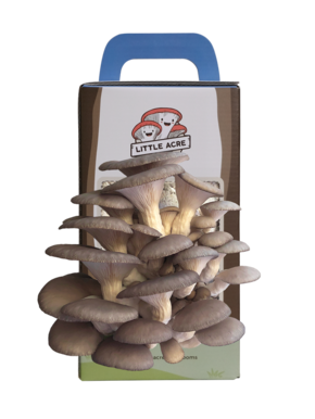 A Pink Oyster Mushroom Growing Kit